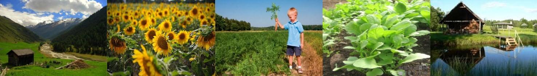 Videi nekaitīgas eļļas